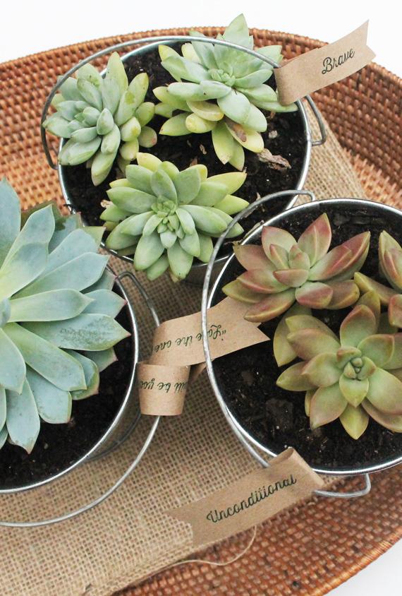 DIY succulent pots gift