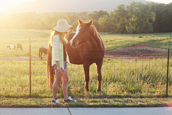 Summer and Horses