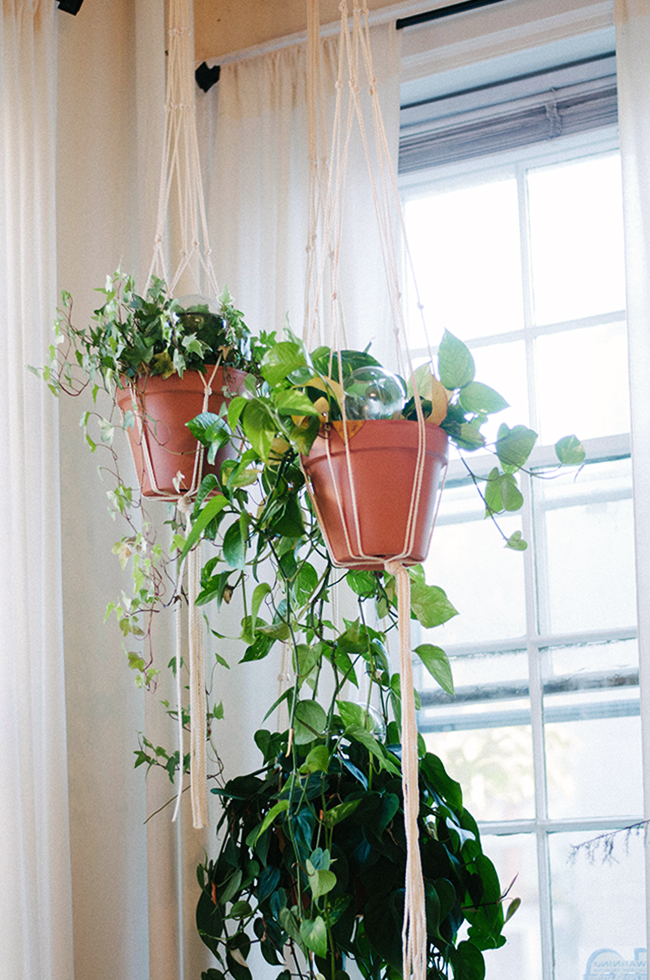 hanging plants | sweet root village