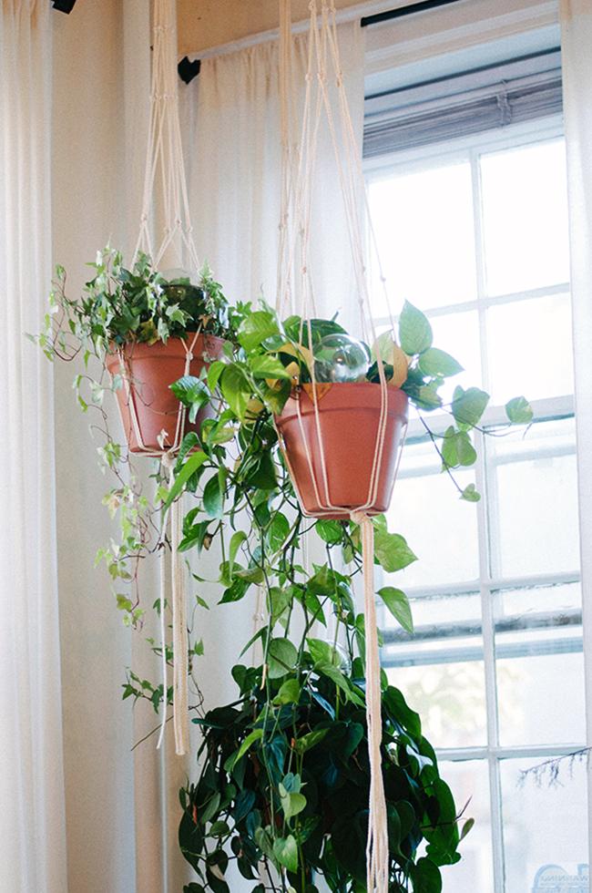 hanging plants | sweet root village