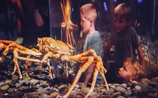 Giant Crabs