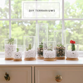 DIY Terrariums.