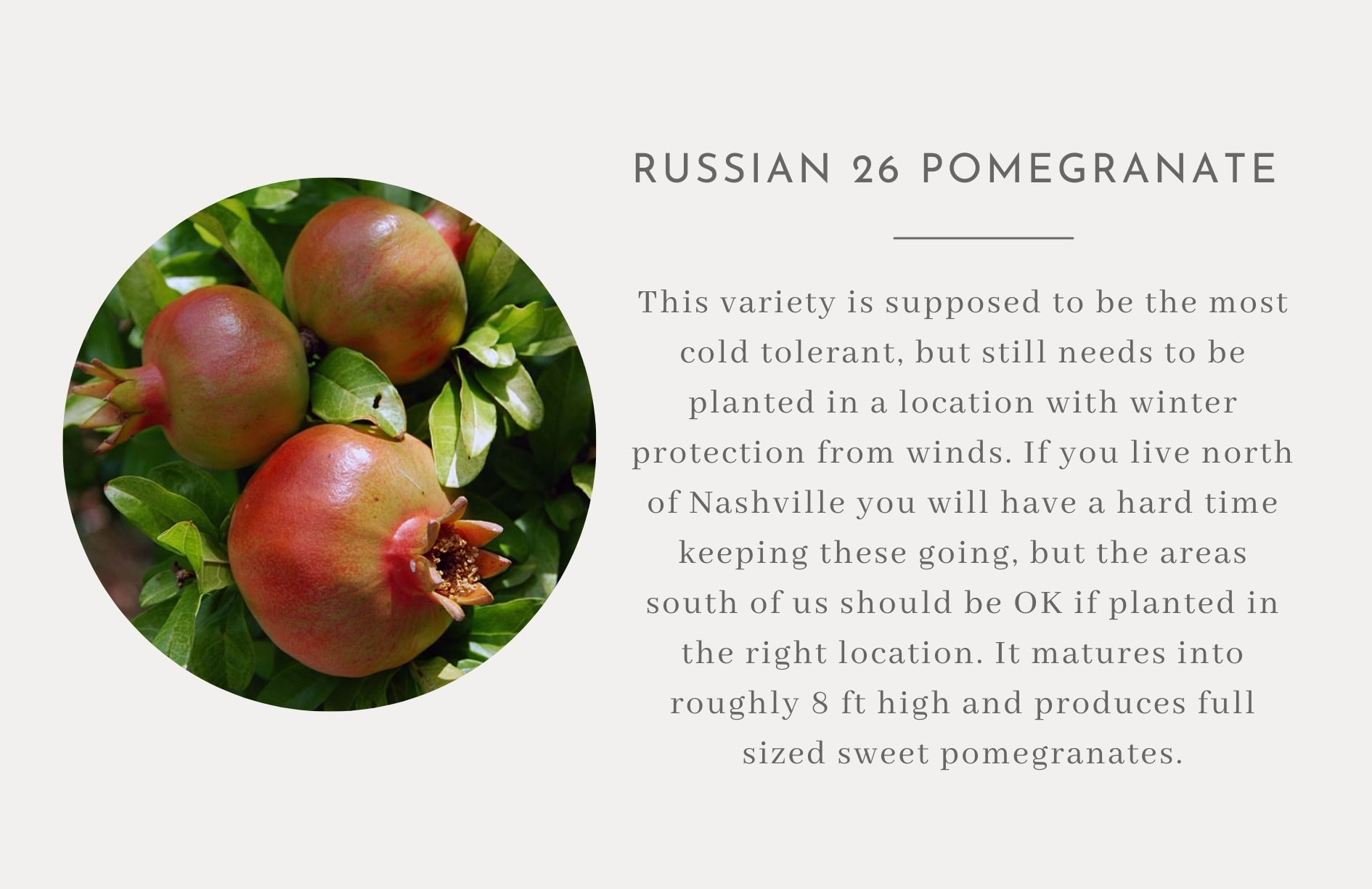 Pomegranate- Edible landscape ideas