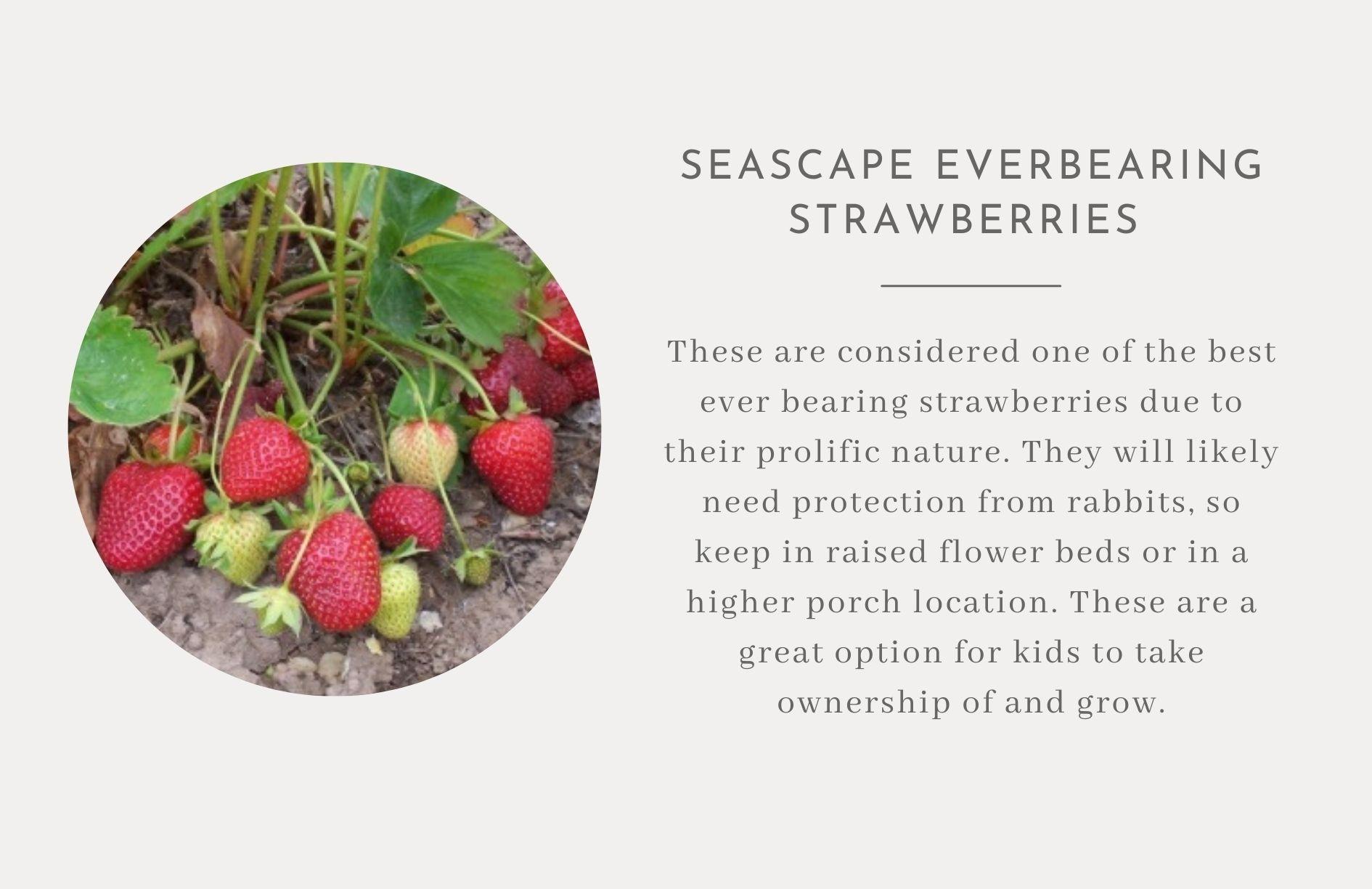 Strawberries- Edible landscape ideas