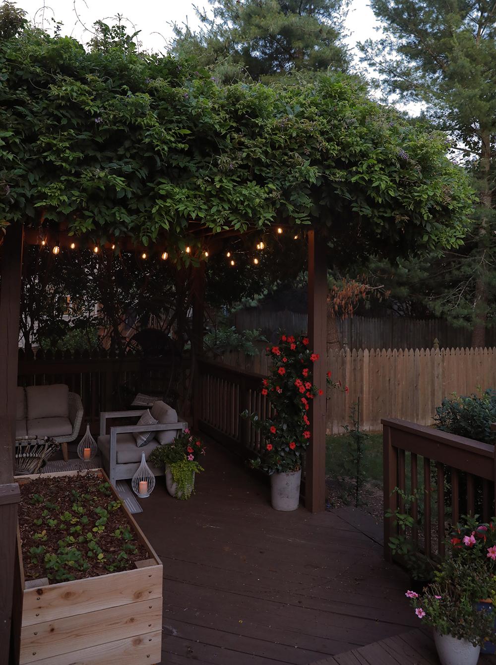 wisteria vine over pergola patio design